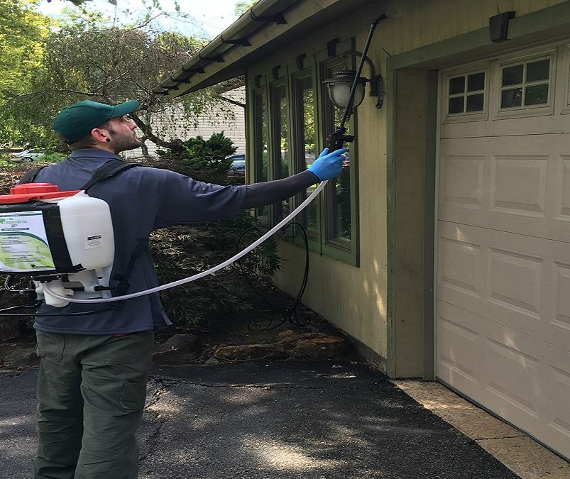 Safeguarding your Home from the Harmful Effects of Pesticides
